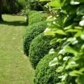 Jardin Petite Emeraude Buis
